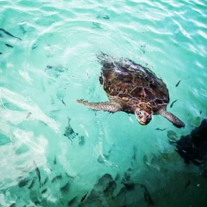 A Beautiful Mexican Turtle visiting Isla Mujeres!