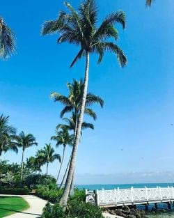 A picture of Coconut trees along the waters edge in Captiva Island