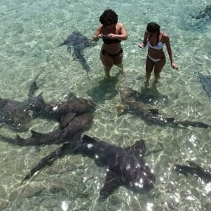 Shark tales in Exumas.