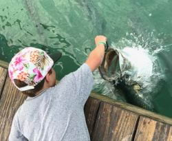 Hand feeding Tarpon around Islamorada in the Florida Keys!