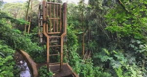 The jungle gate is locked in Oahu Hawaii