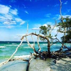 Natural tree sculpture on Sanibel Island