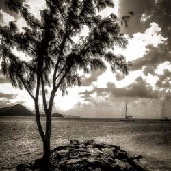 A black and white image of the ocean and trees of St. Lucia